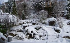Мифы о красивом зимнем саде