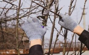 Март: 5 неотложных дел в саду