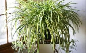 Растения фитофильтры: очищаем воздух в квартире