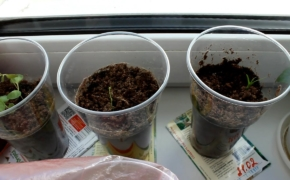 Как вырастить комнатные цветы из семян?