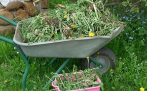 Проверенные способы борьбы с сорняками