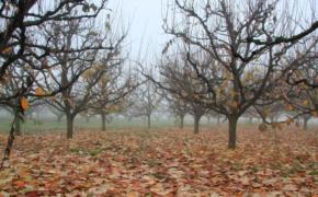Ноябрь: готовим сад к зиме