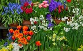 Высаживаем весенние луковичные цветы