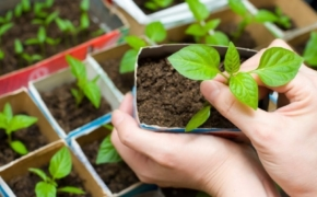 Как сэкономить на рассаде