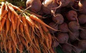 Морковь и свекла: как предотвратить потери корнеплодов в зимний период?