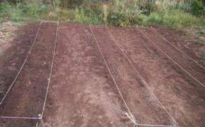 Пора сажать: готовим растения и землю