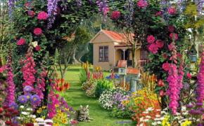 Как удобрять цветы в саду