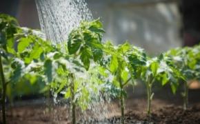 Как летом поливать огород