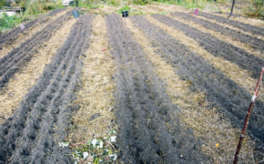 Органический метод земледелия Телепова