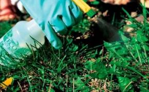 Правила использования гербицидов: как обрабатывать участок