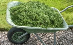 Горячая трава: используем для мульчи и удобрения