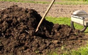Подкормки растений: опыт лентяя